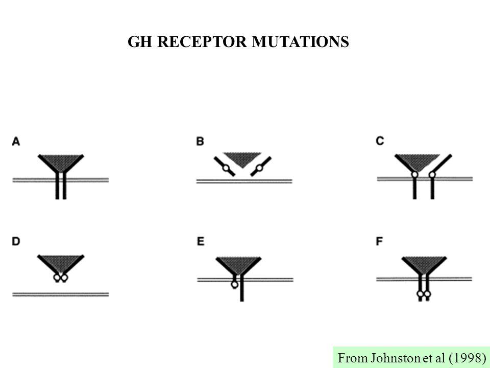 GH RECEPTOR MUTATIONS From Johnston et al (1998)