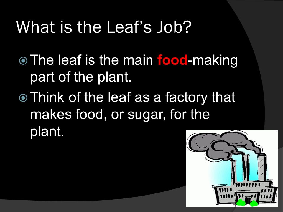 Structures And Functions Of The Leaf Ppt Video Online