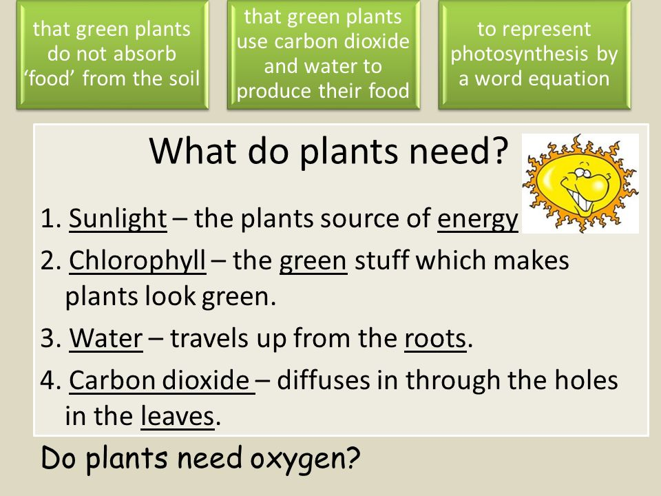 carbon dioxide and food trough photosynthesis Carbon dioxide enters the plant through the stomata water enter the roots sunlight is absorbed by the chlorophyll the energy from the sunlight chemically combines the carbon dioxide and water to form sugar and oxygen.