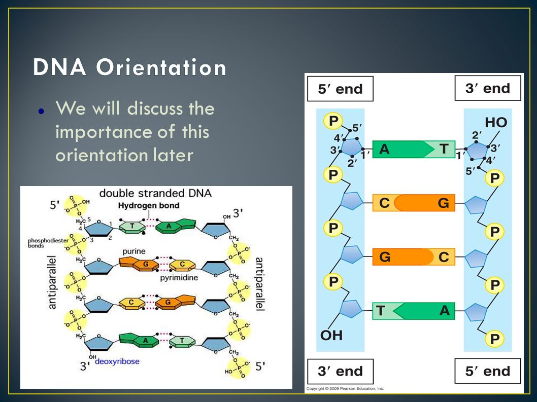 Dna and rna structure worksheet answers