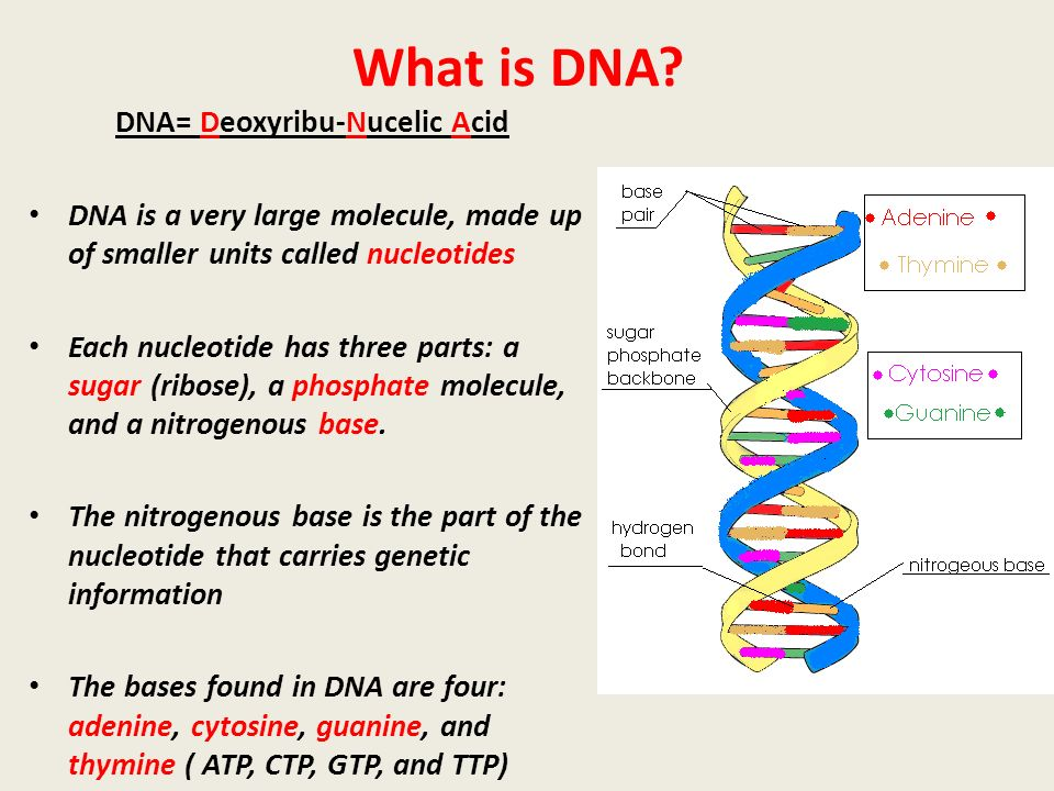 what is nano dna sequencing Fourthly, instead of sequencing dna during polymerization, single dna strands are sequenced through nanopore by means of dna strand depolymerization hence, hand-on time for sample preparation such as cloning and amplification steps can be shortened significantly.