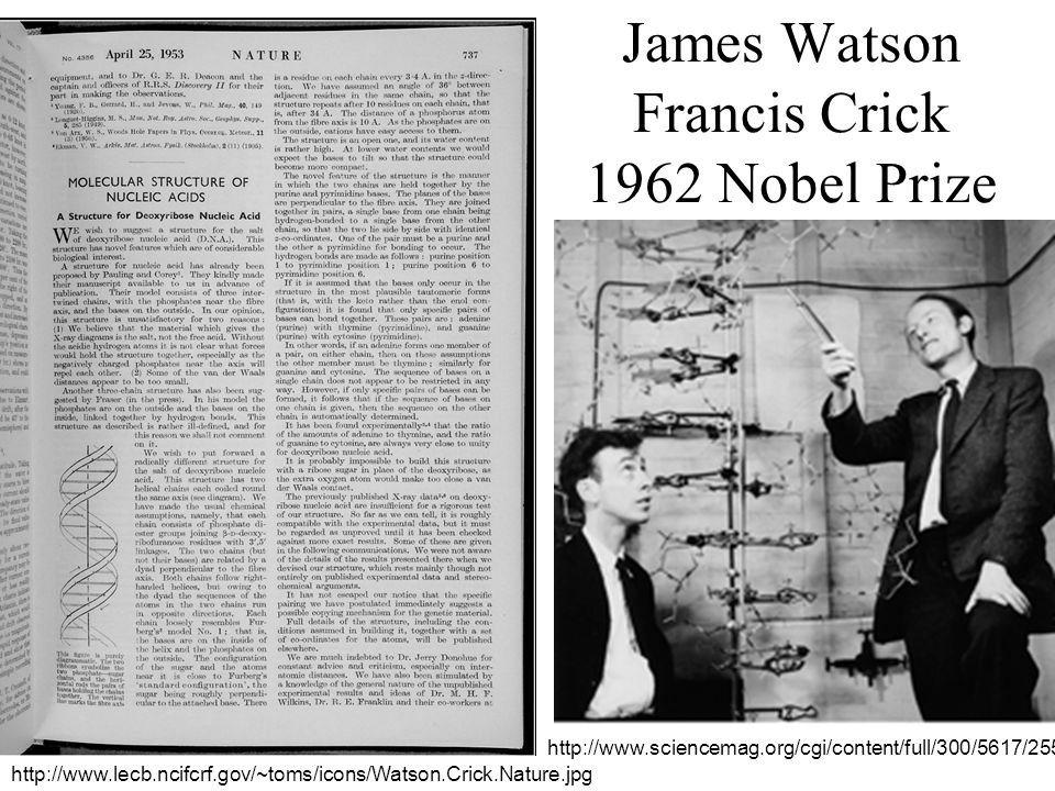 essay on watson and crick Essay on dna: meaning, features and forms james watson and francis crick were awarded nobel prize in this is the same form of dna proposed by watson and crick.