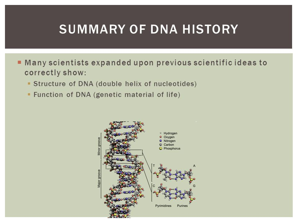 an overview of the beginnings of the science of genetics Product overview definition  unit test answers american pageant new world beginnings review  answer key no genetics the science of heredity answer key.