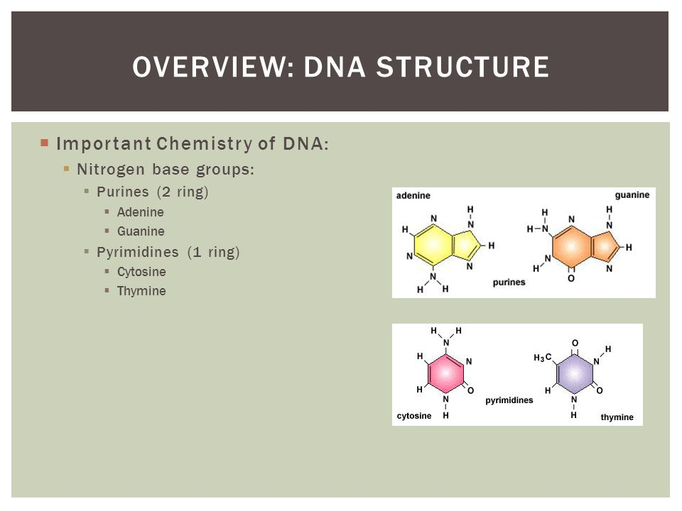 structure of dna an overview An overview of dna  alternative dna structures: an overview of a-dna, b-dna, and z-dna formations quadruplex dna: an examination of sequence, structure,.