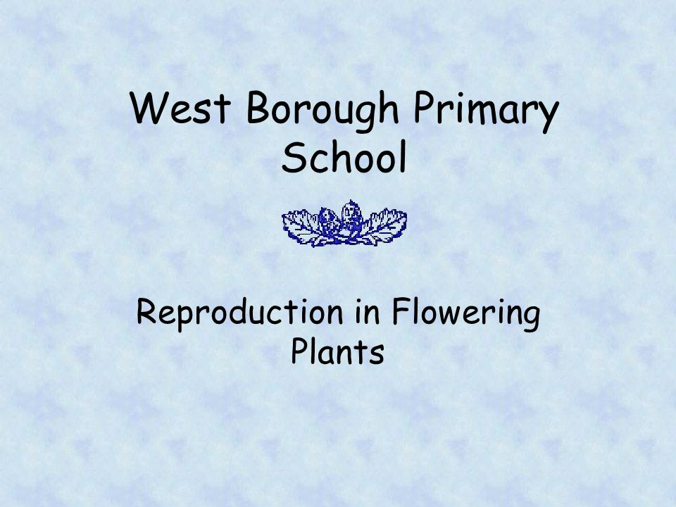 West Borough Primary School