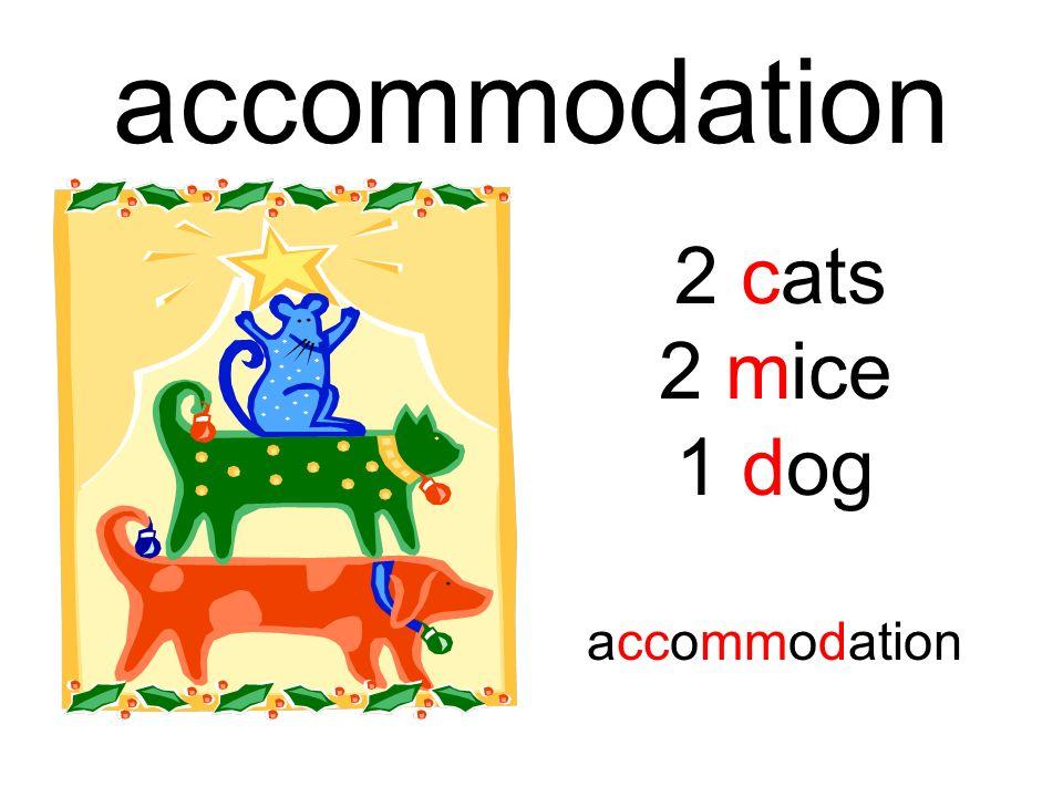 accommodation 2 cats 2 mice 1 dog accommodation