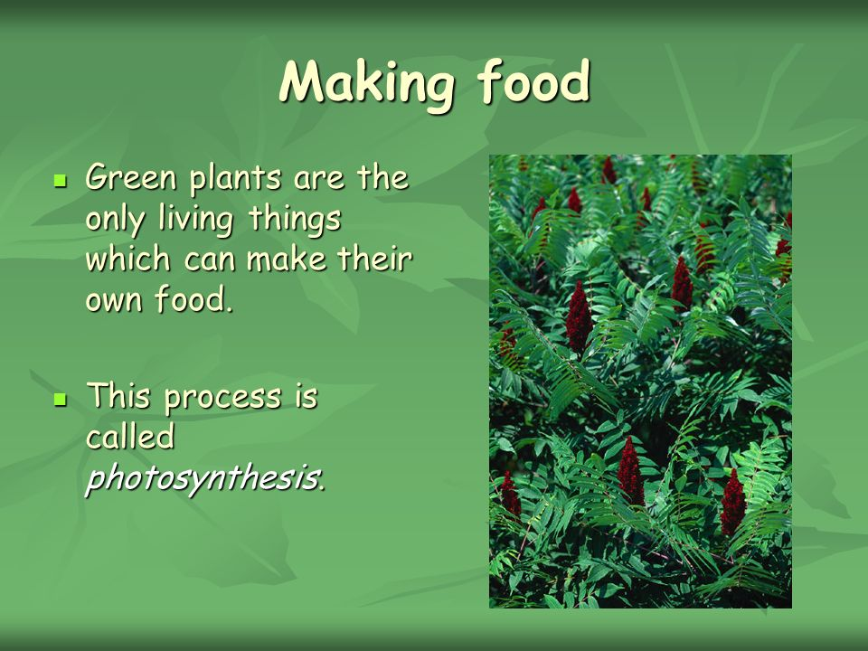 Making food Green plants are the only living things which can make their own food.