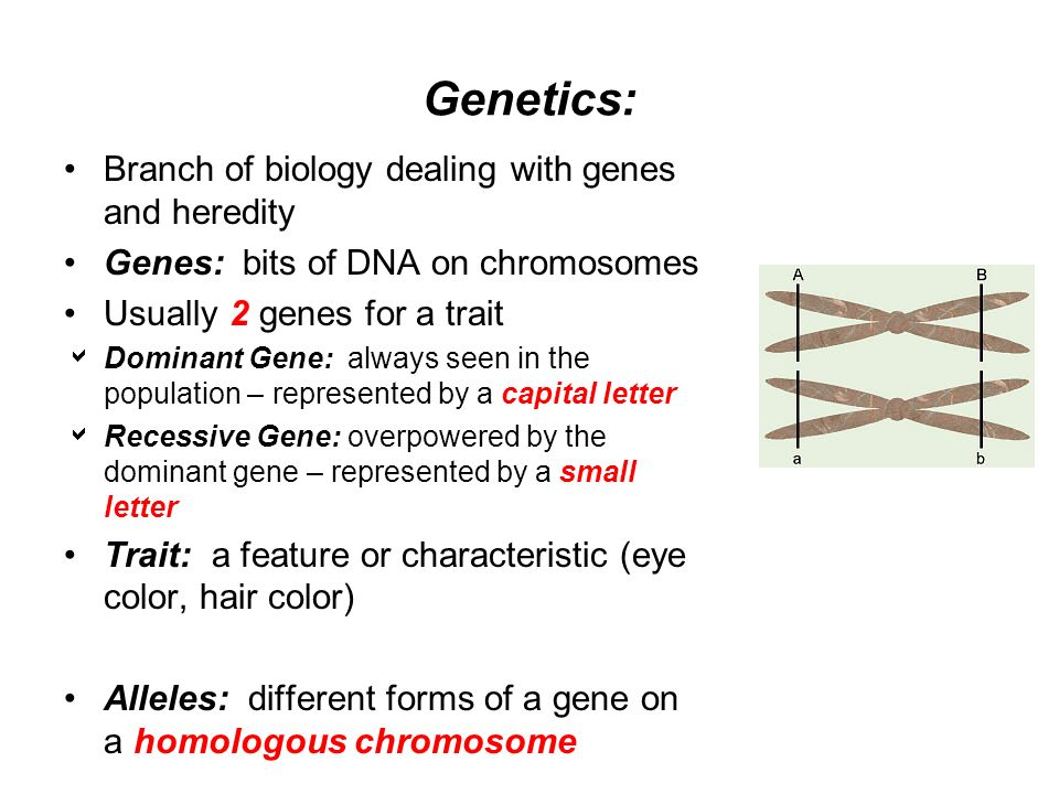 Genetics Branch Of Biology Dealing With Genes And Heredity Ppt