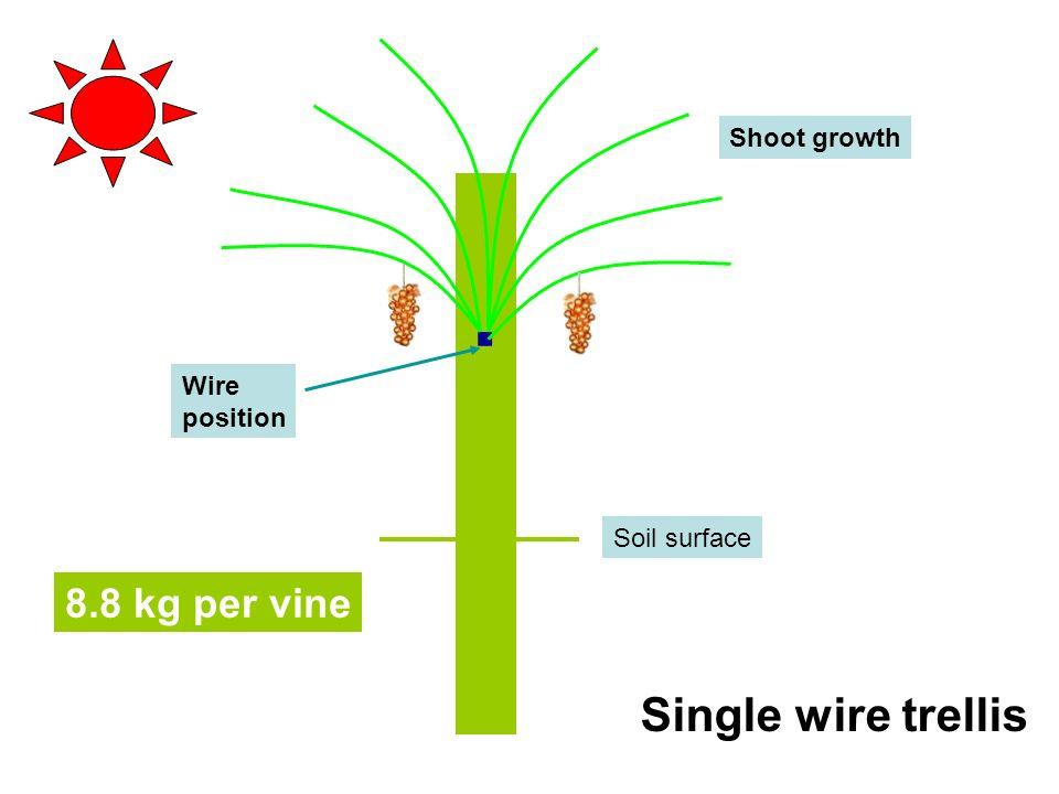 the trellis and the vine pdf