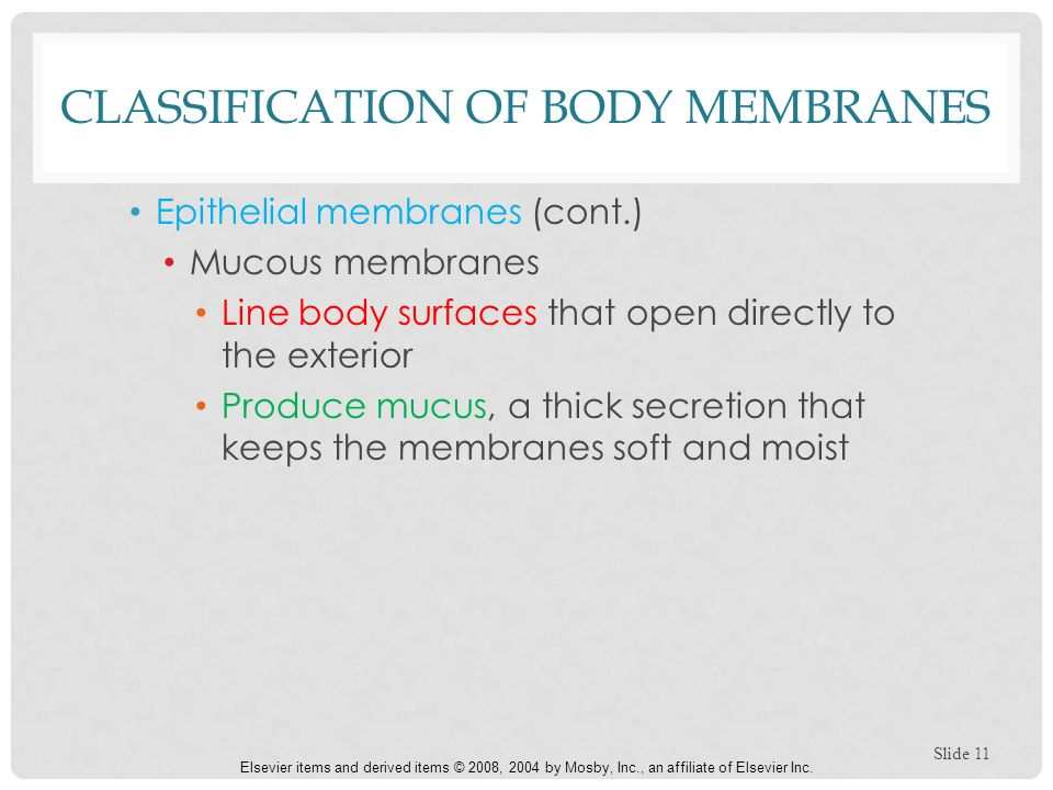 classification of body membranes Classification of synthetic membranes a membrane can be natural or synthetic, thick or thin, its structure can be homogeneous or heterogeneous, transport across.