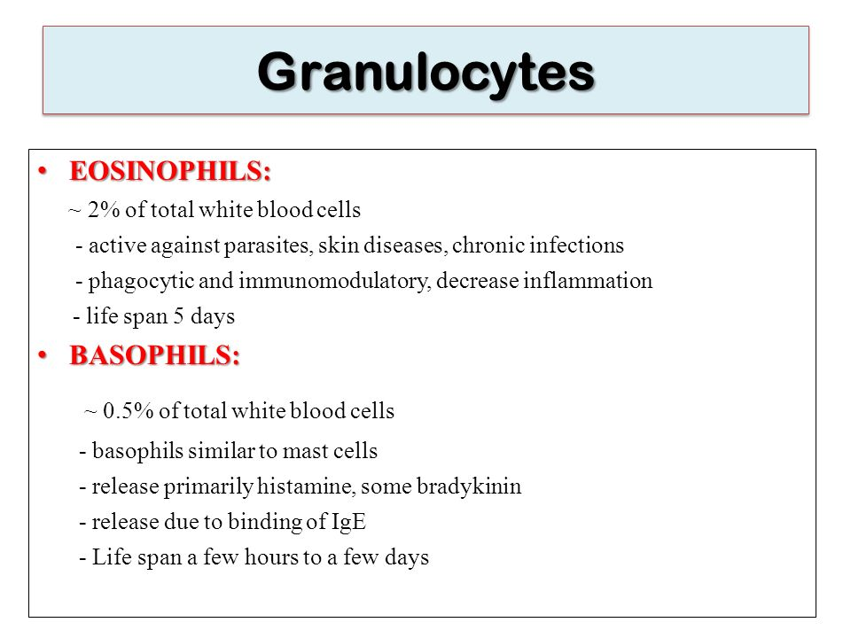 Granulocytes ~ 0.5% of total white blood cells EOSINOPHILS: BASOPHILS: