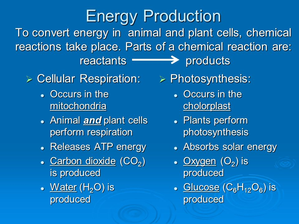 Science STAAR Notebook Biology - Category 1 - ppt video ...
