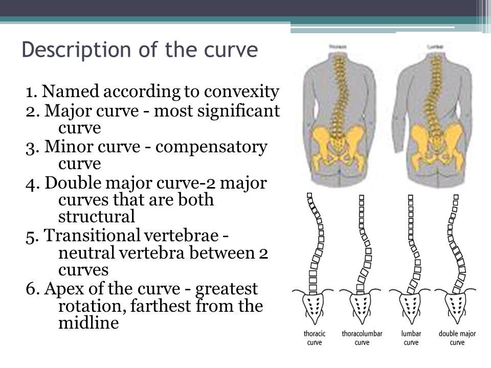 Charmant Transitional Anatomy Definition Zeitgenössisch - Anatomie ...