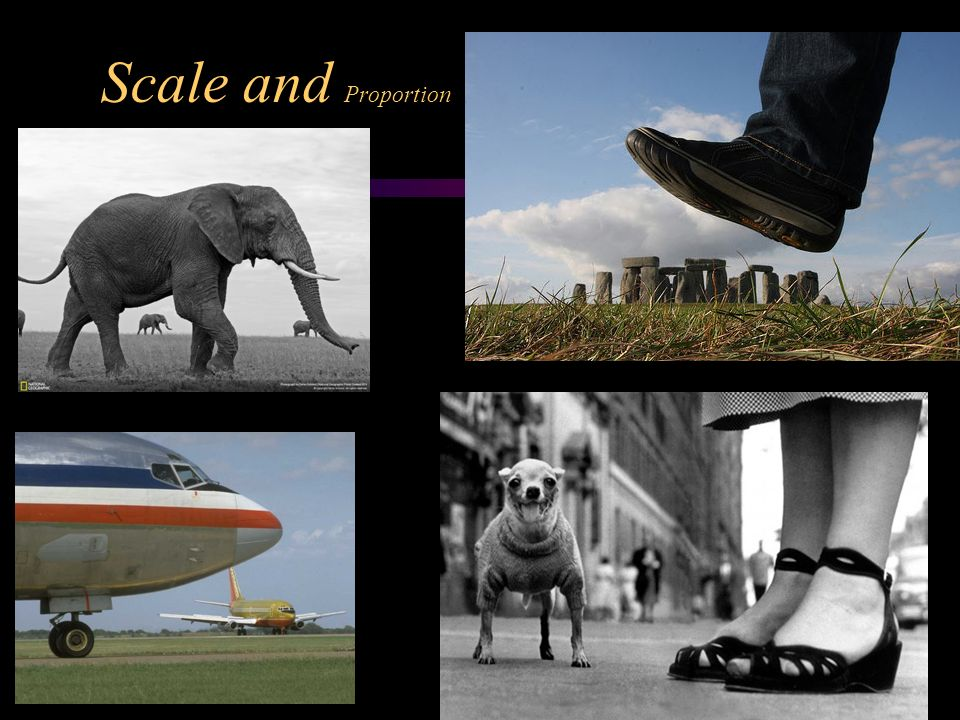 Photography composition using the elements and principles - Scale and proportion in art ...