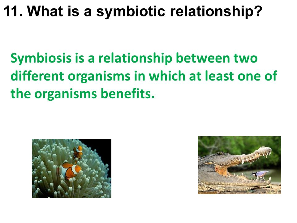 what is the symbiotic relationship between two organisms