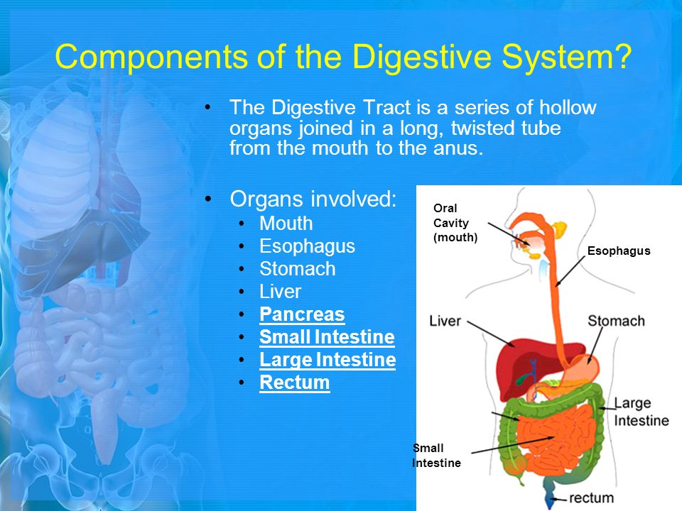 Anus carbohydrate digestion from mouth