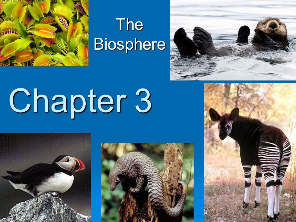 The Biosphere Chapter 3