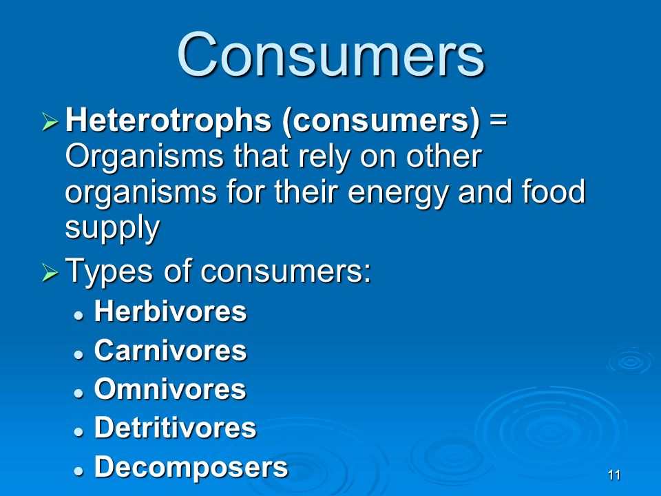 Consumers Heterotrophs (consumers) = Organisms that rely on other organisms for their energy and food supply.
