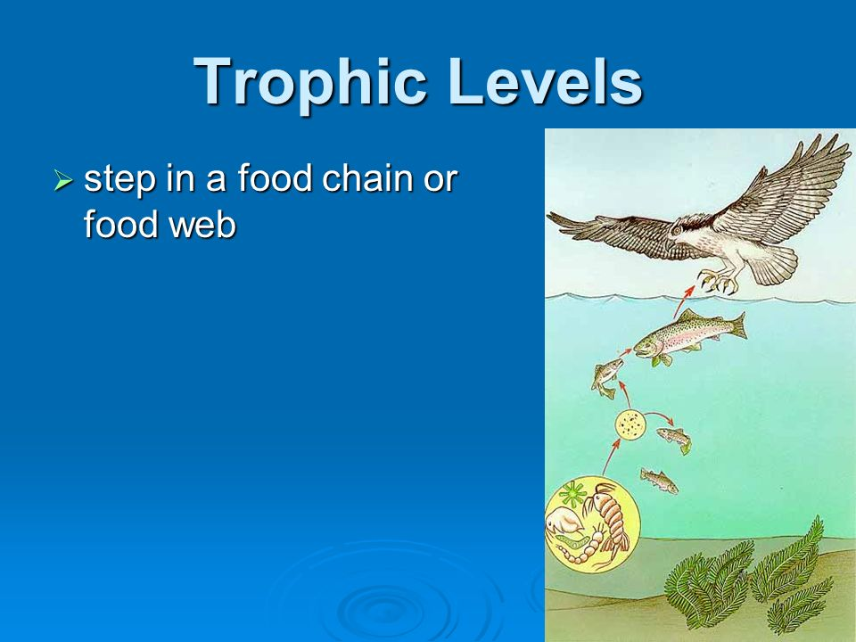 Trophic Levels step in a food chain or food web