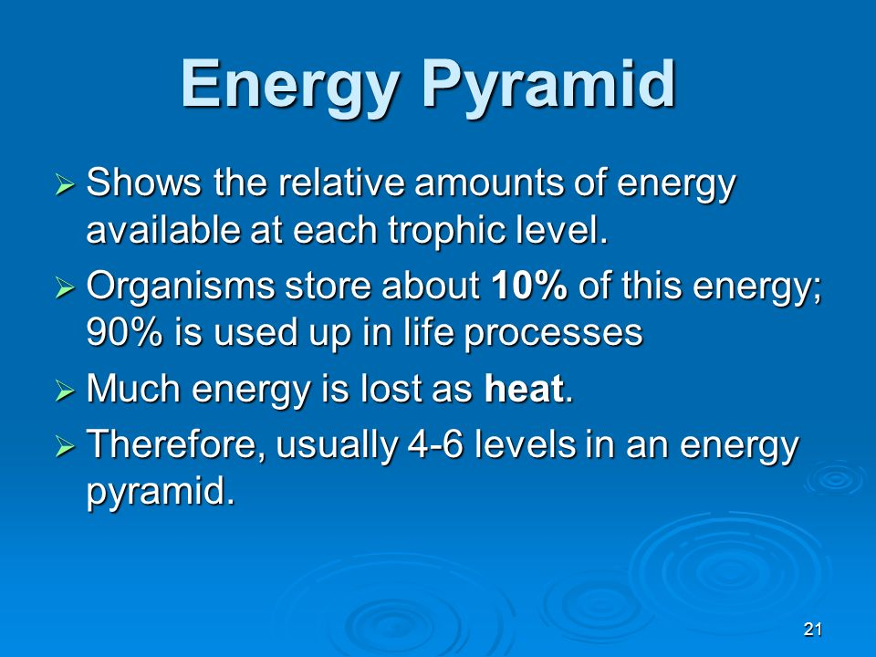 Energy Pyramid Shows the relative amounts of energy available at each trophic level.