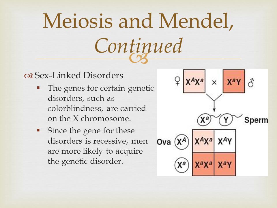 sex linked traits through meiosis and how If they are using a punnett square to investigate a sex-linked trait,  made it through review and summary meiosis introduction  particular traits teacher's .