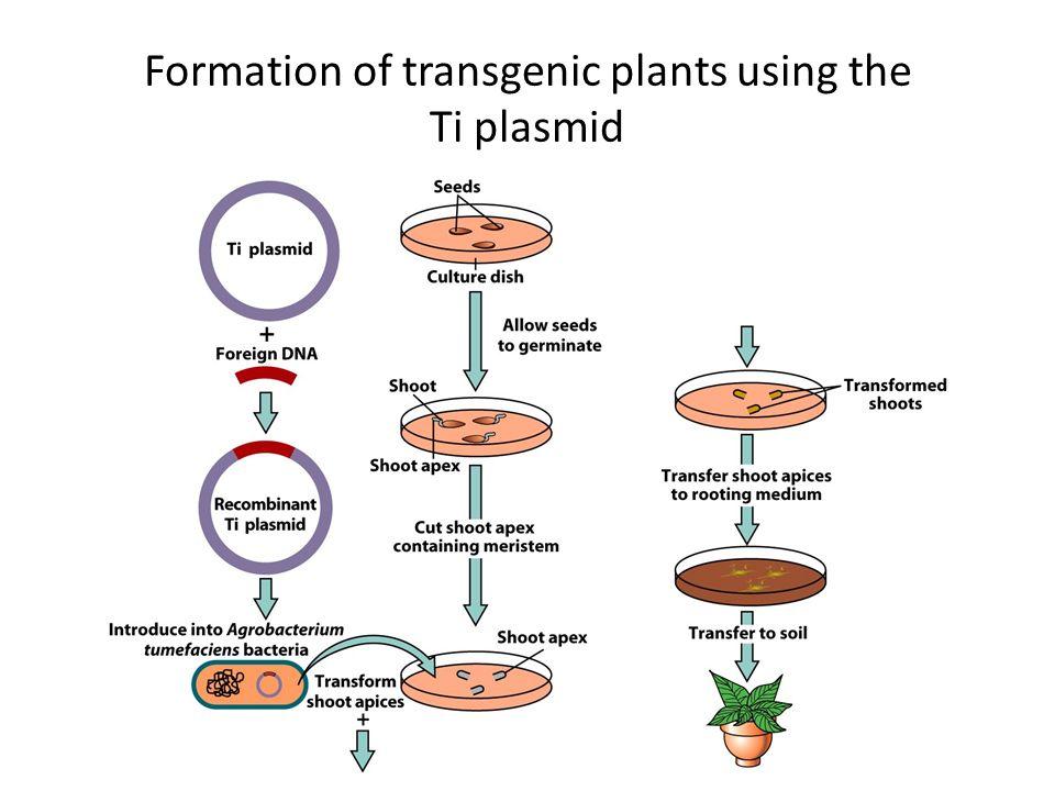 transgenic plants and animals - photo #45
