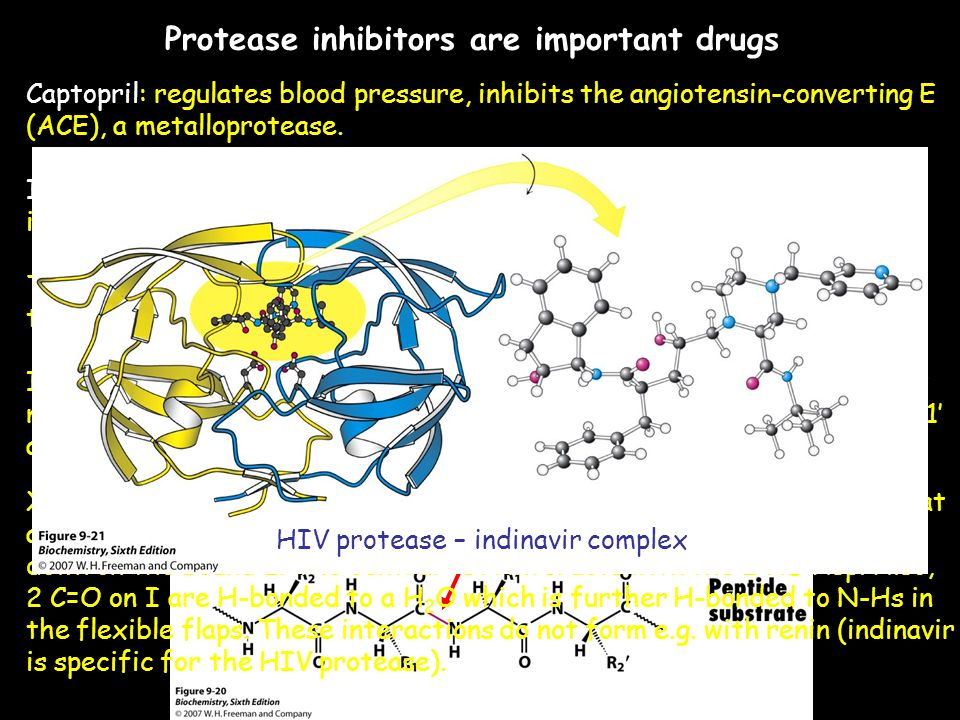 garrett and grisham biochemistry pdf
