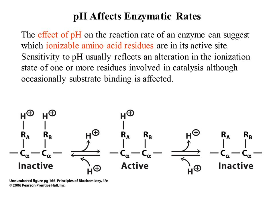 nacl affects on enzymatic reaction Here, we have investigated the putative coupling between changes in stability  induced by salt and its effect on enzyme activity our results.