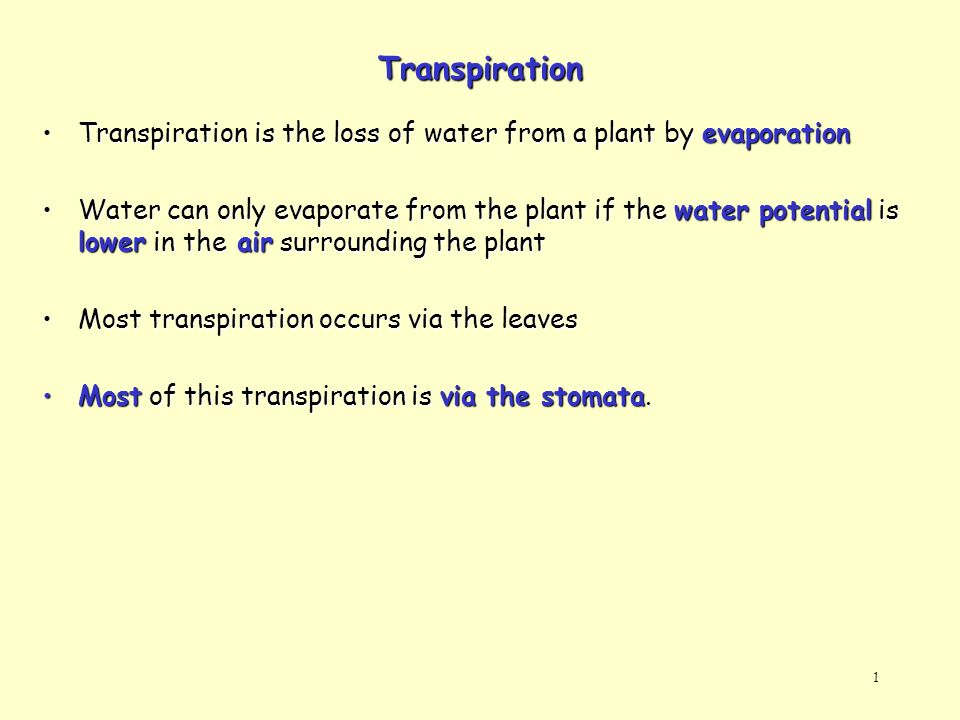 Transpiration Transpiration is the loss of water from a plant by evaporation.