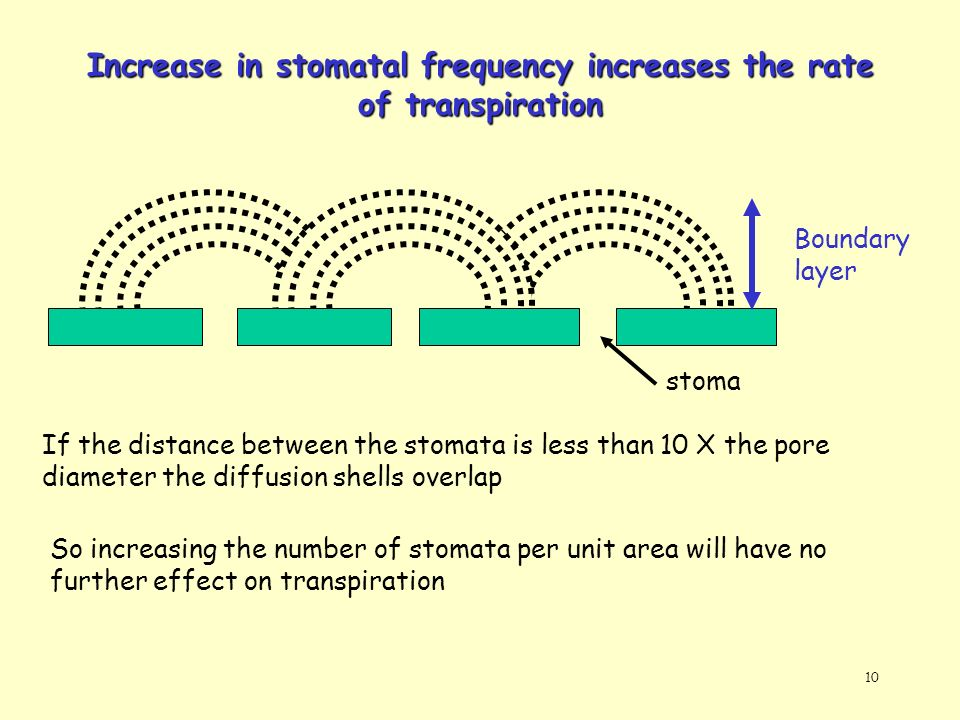 Increase in stomatal frequency increases the rate of transpiration