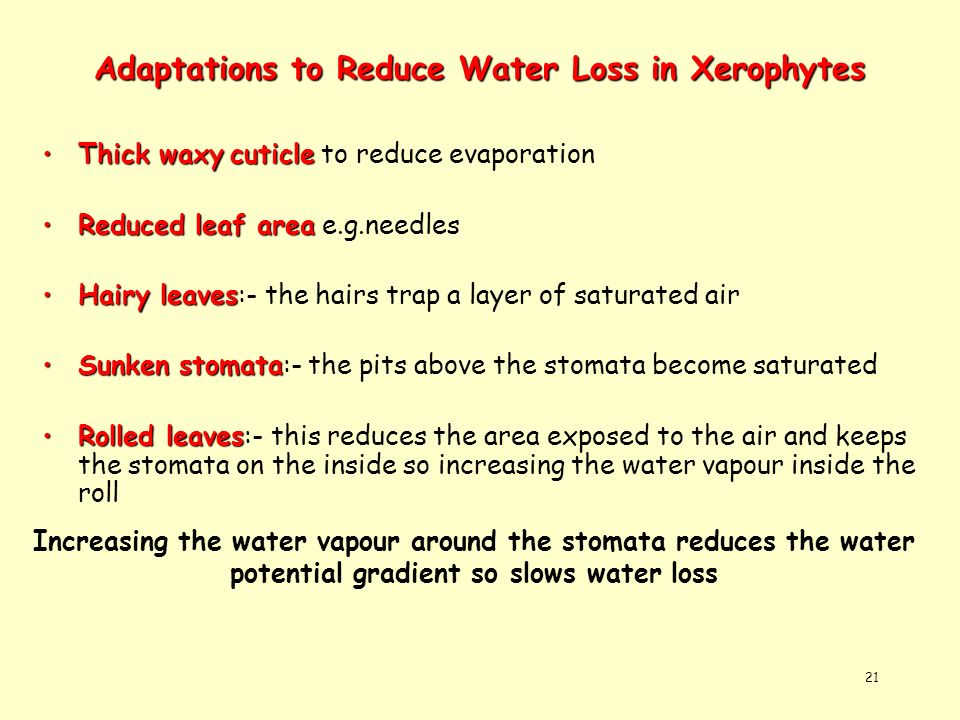 Adaptations to Reduce Water Loss in Xerophytes