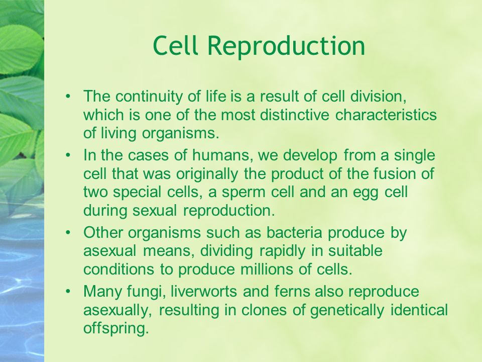 an analysis of the characteristics of the process of cellular reproduction Asexual reproduction in animals: characteristics  in this process of asexual reproduction  the cultur­ing of cells or tissues results in the formation of.