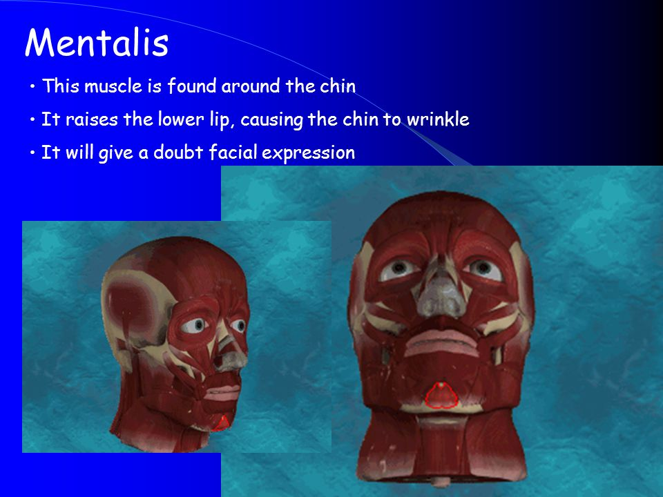 Mentalis This muscle is found around the chin