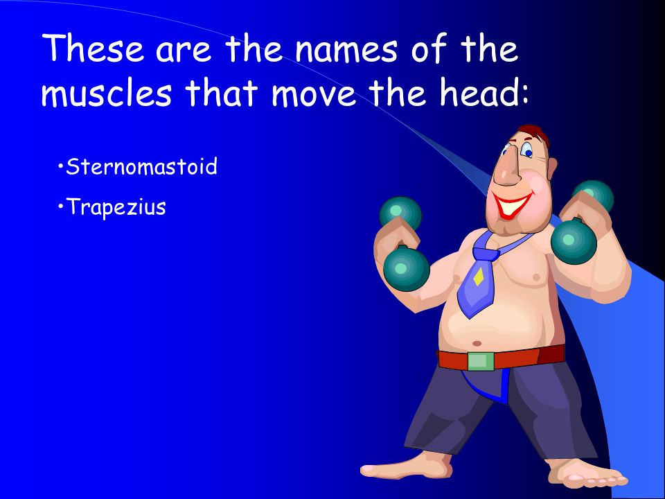 These are the names of the muscles that move the head:
