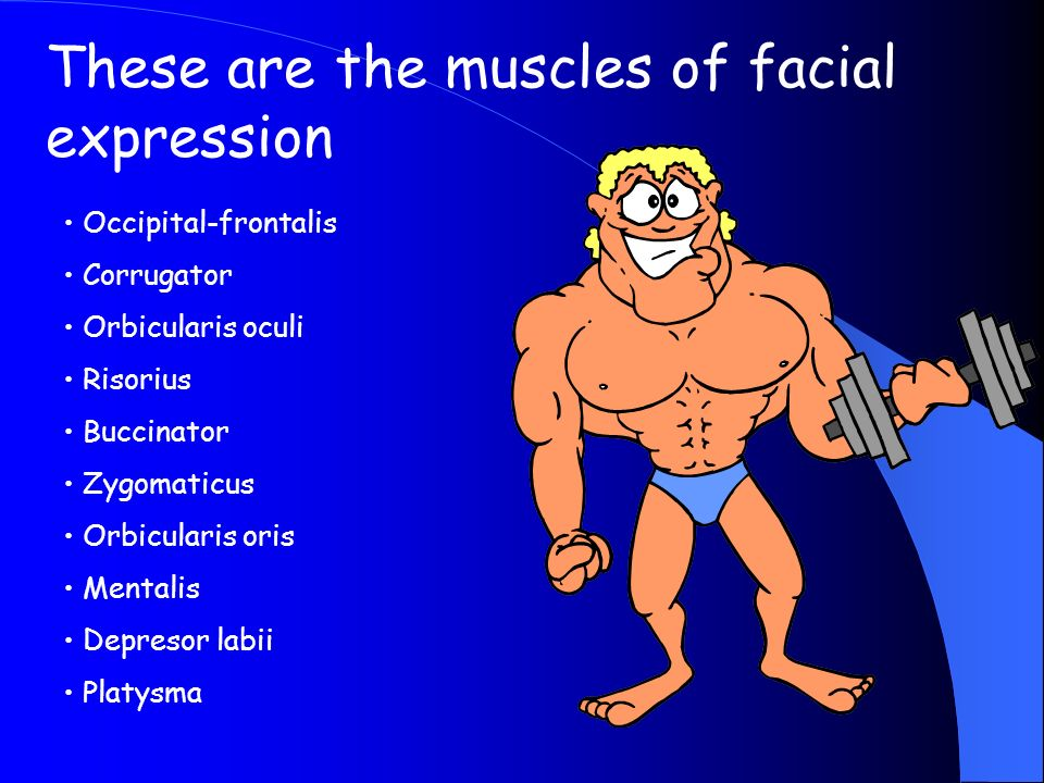 These are the muscles of facial expression