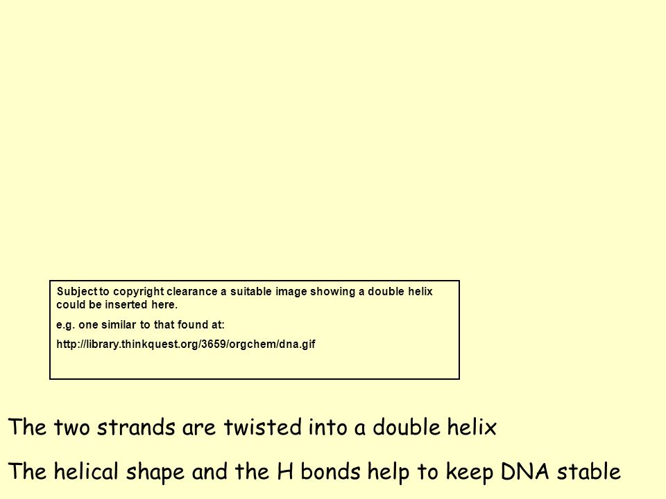 The two strands are twisted into a double helix