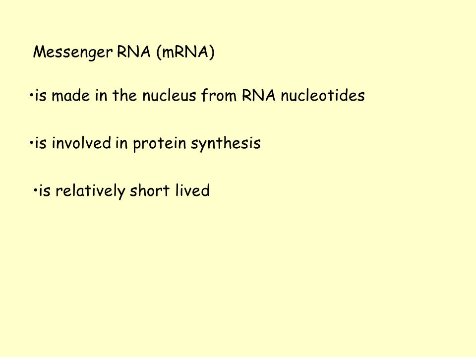 Messenger RNA (mRNA) is made in the nucleus from RNA nucleotides. is involved in protein synthesis.