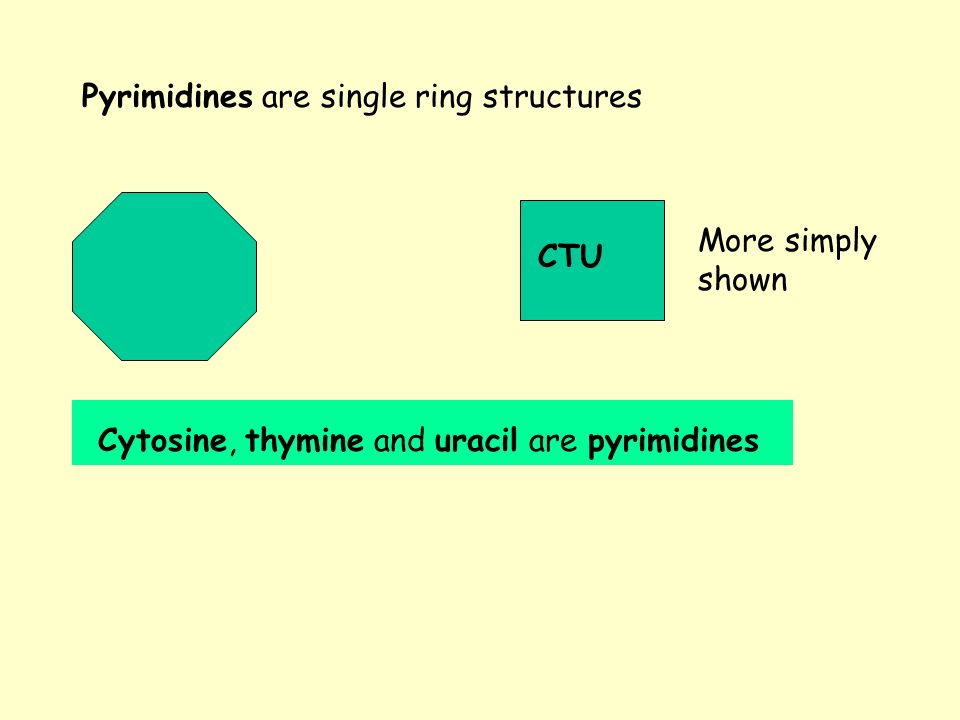 Pyrimidines are single ring structures