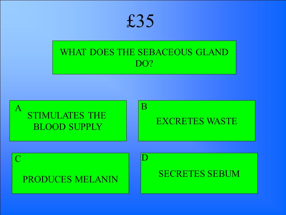 WHAT DOES THE SEBACEOUS GLAND