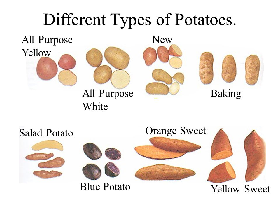 Different Types of Potatoes.