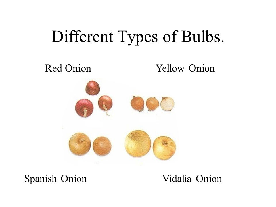 Different Types of Bulbs.
