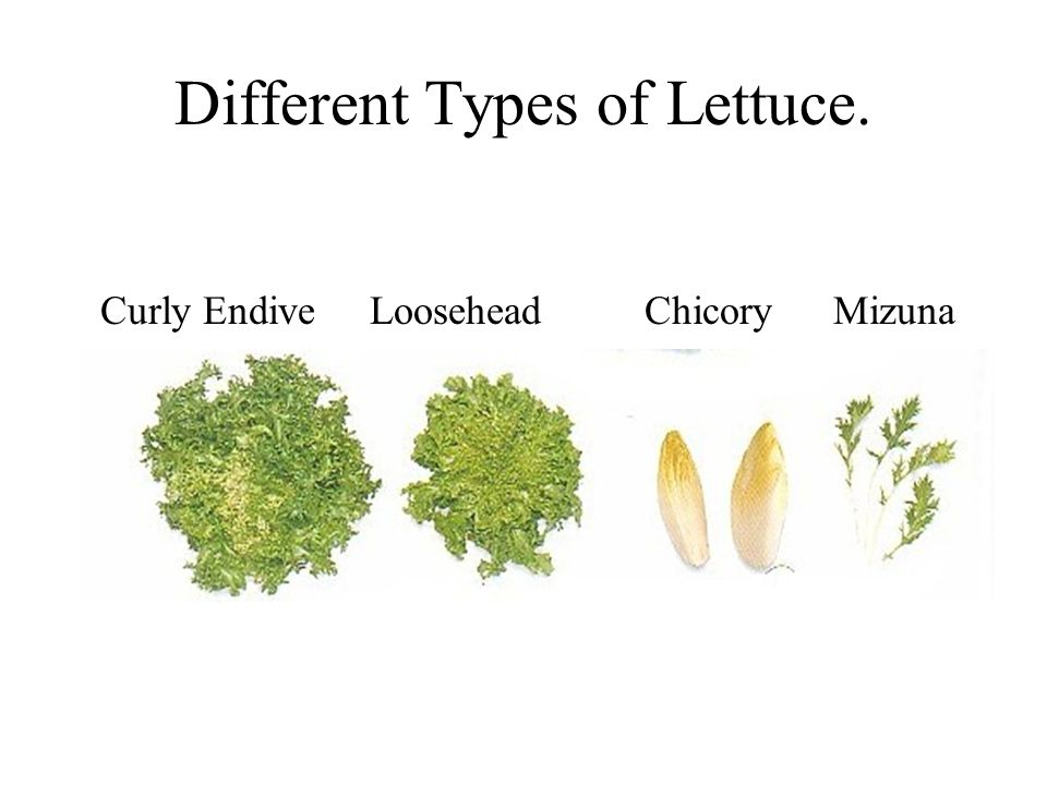 Different Types of Lettuce.