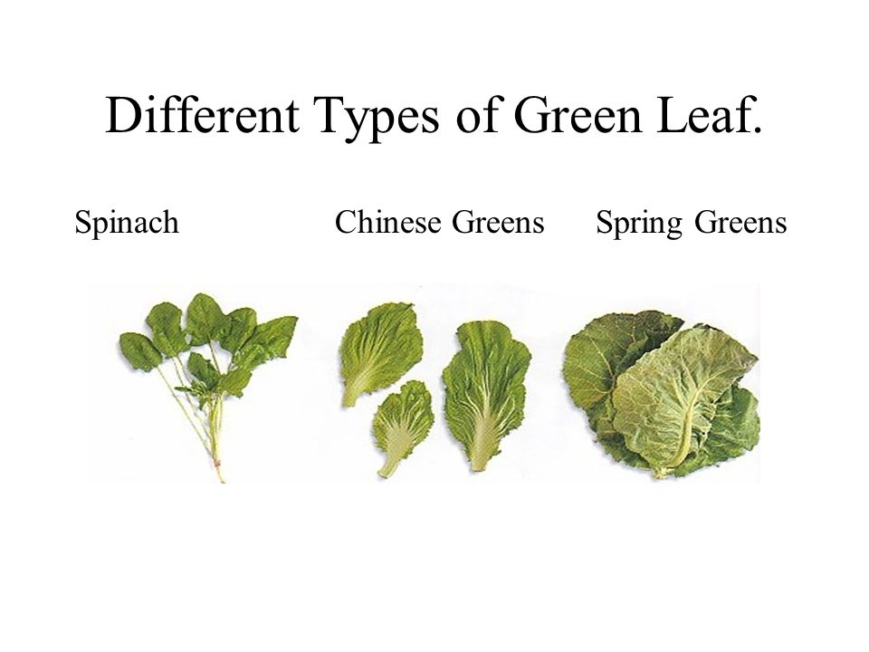 Different Types of Green Leaf.