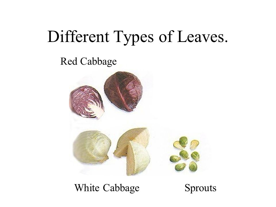 Different Types of Leaves.