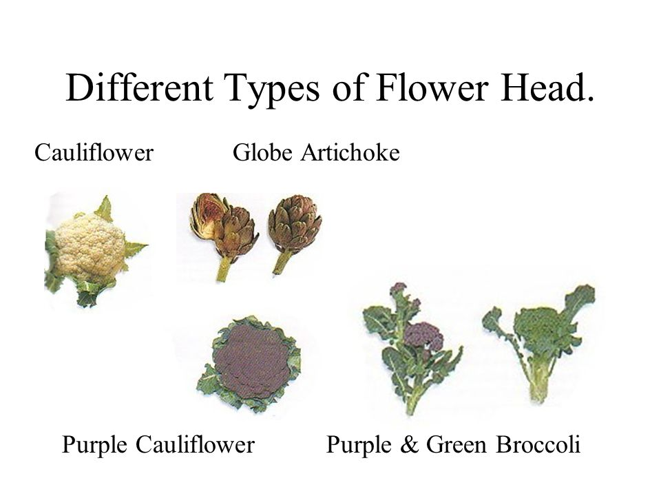 Different Types of Flower Head.
