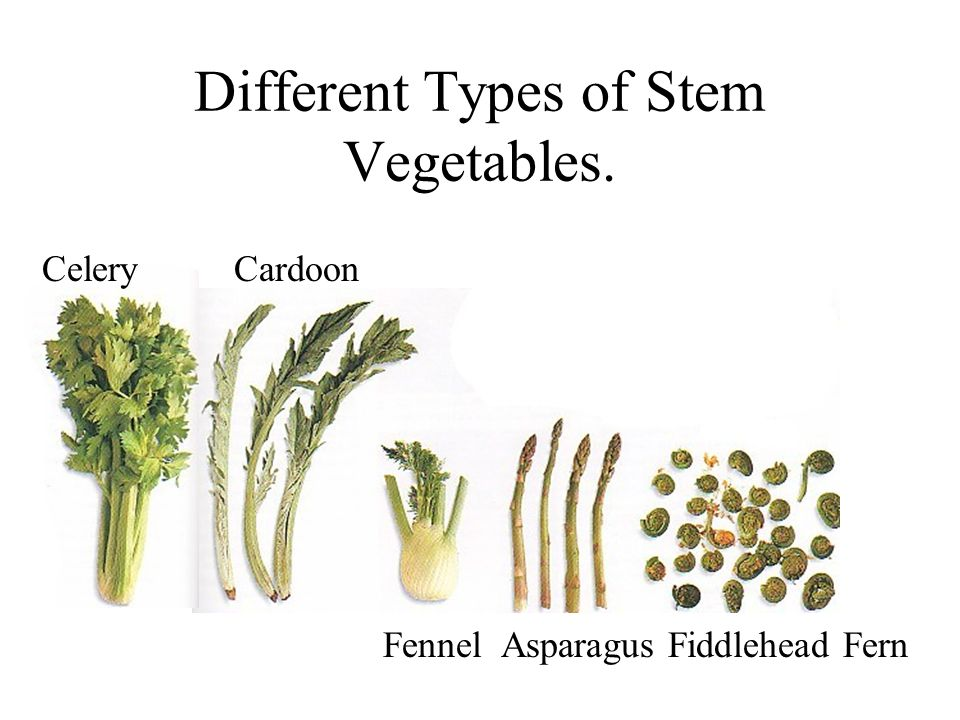Different Types of Stem Vegetables.