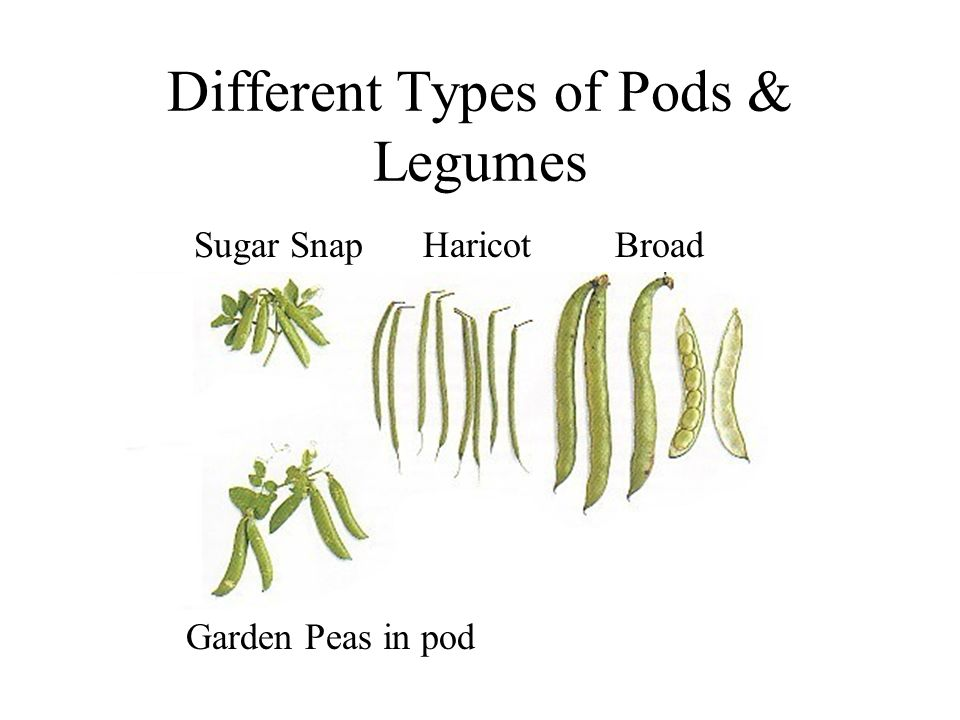 Different Types of Pods & Legumes