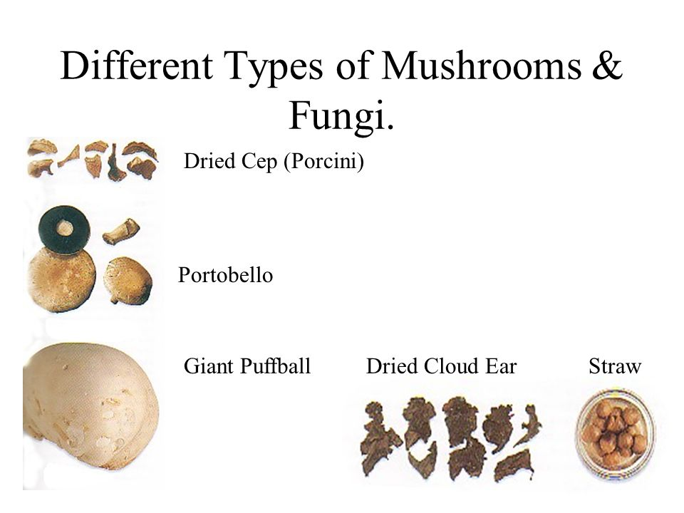 Different Types of Mushrooms & Fungi.
