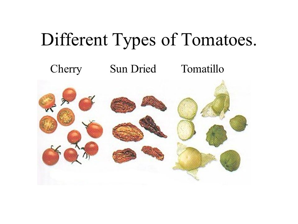 Different Types of Tomatoes.