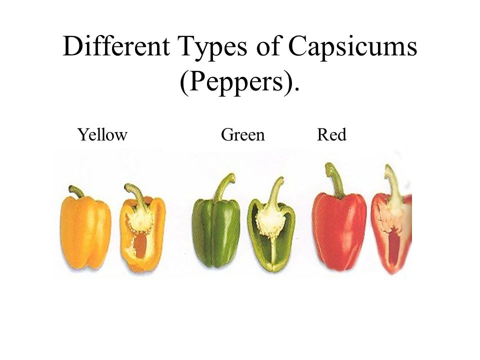 Different Types of Capsicums (Peppers).